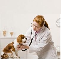 female vet cares for dog